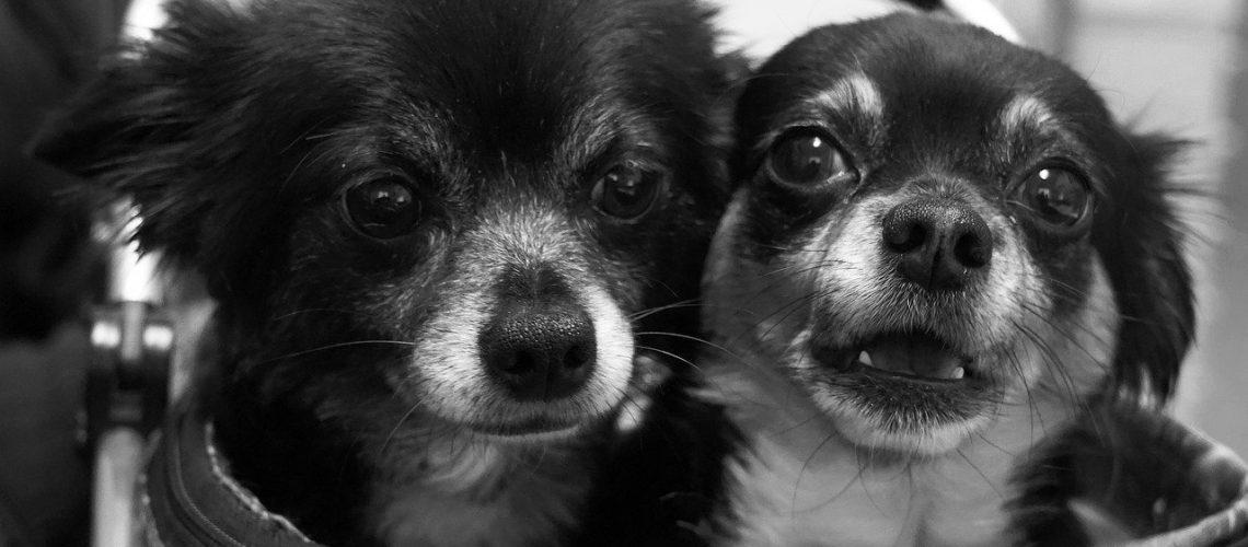 אימוץ כלבים במרכז